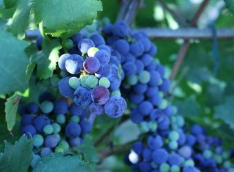 Imotski Wine Tour, Croatia