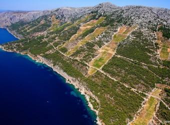 Hvar Island Wine Tour