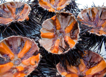 Sea urchin tasting Split, Croatia