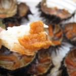 Taste fresh sea urchins in Croatia